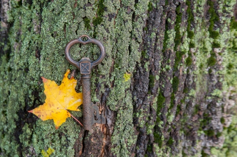 Vintage key with autumn sitem lying on the moss on the bark