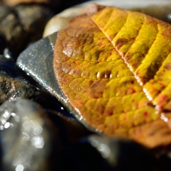 beautiful autumn leaf on river shore