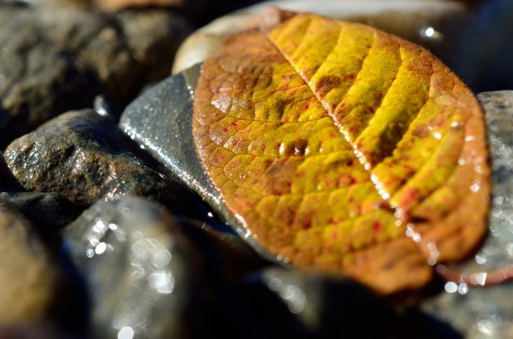 beautiful autumn leaf on river shore