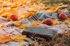 Book ground autumn