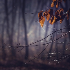 Dark forest in a misty autumn morning