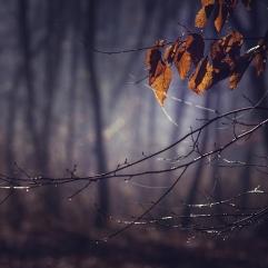 Dark forest in a misty autumn morning