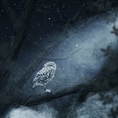awakening owl sitting on tree illuminated by bright moonlight