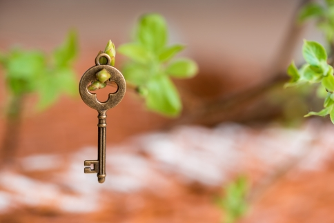 Ancient vintage key on a tree branch, green young leaves. spring and summer visionCopy space. Top view.