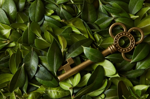 Key green leaves