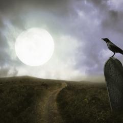 Raven winding road