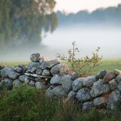 Stone fence Gotland