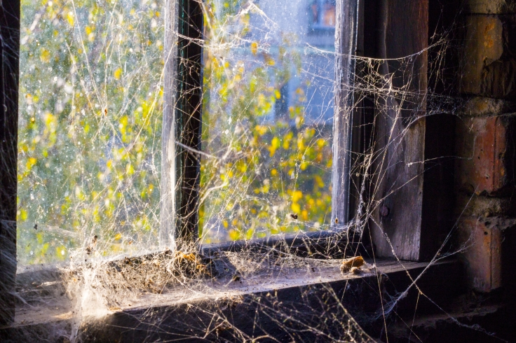 Cobweb Window