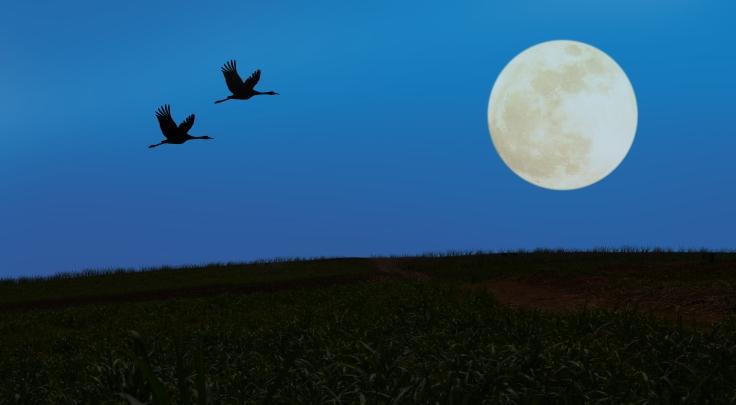 Crane Full Moon